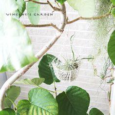 ぶいくんの庭の画像|エキサイトブログ (blog)
