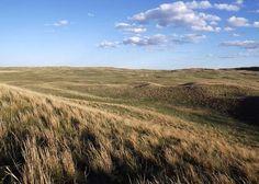 Nebraska Sandhills Pasture by Alexis Swendener