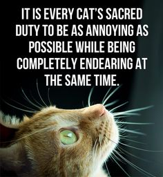 Every cat's sacred duty… and how ironic is it that as I pin this, my cat is sitting on my lap making my leg go to sleep?
