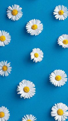 Awesome free wallpaper from daisy wallpaper, accent wallpape Frühling Wallpaper, Spring Wallpaper, Phone Screen Wallpaper, Flower Phone Wallpaper, Pastel Wallpaper, Lock Screen Backgrounds, Wallpaper Quotes, Simple Wallpapers, Blue Wallpapers