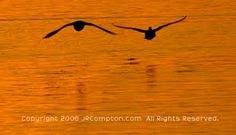 Image result for ducks flying away from sunset