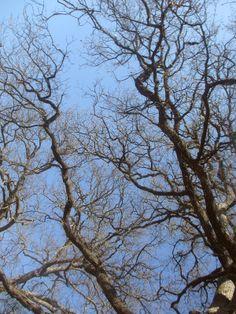 Eiche im Kaiserwald von Pula - www.inistrien.hr #Natur #Istrien