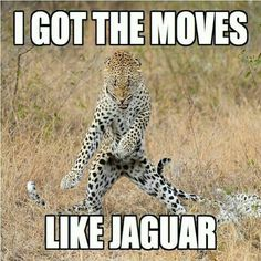 Fest løs - i morgen er der Zumba Gold kl 9 :) Vi ses :) - Party like a jaguar - tomorrow we dance Zumba at 9 AM :) See you there