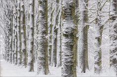 Winter landschap - Bäume im Schnee - Trees in the snow by Erwin Maassen van den Brink