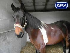 Missy, Lightweight Cob, 10 Years, Mid Surrey All Locations, Pet Search, Cob, Surrey, Sadie, 10 Years, Wildlife, Horses, Pets