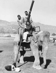 """""""Kangaroo cricket?! There comes a time in every man's life where he needs to take up elephant golf."""""""