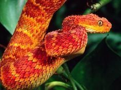 Horned bush viper and African bush viper – Beautiful snakes 1 | list of interesting things
