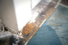 These are termite droppings.  It's a sure sign you've got an infestation.