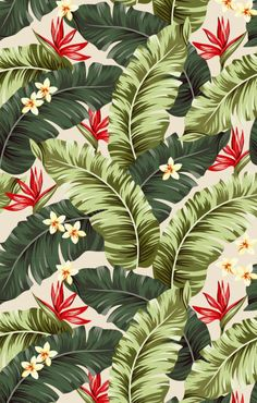 Pattern Tropical