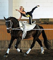 Equestrian Vaulting! Love to watch this! Amazes me!
