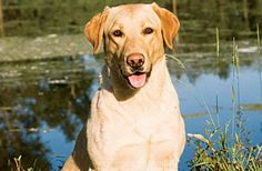 Perfect Hunting Dog: The Best Breed for Your Hunting Style | Field & Stream