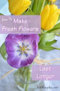 Follow these tricks to make fresh cut flowers last longer and keep your flowers fresh, in some cases weeks longer!