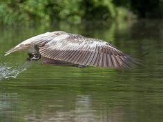 Bird Sanctuaries in Madhya Pradesh, India @ Sanctuariesindia.com