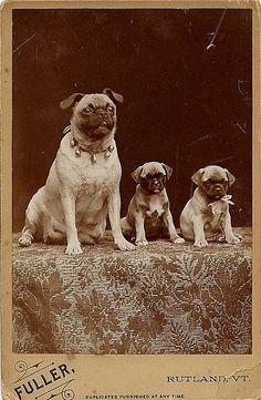Mama & pups
