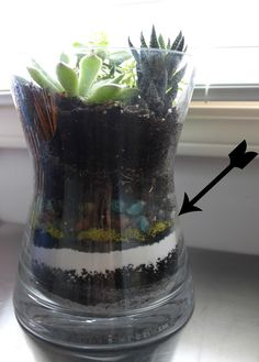 tip for planting in pots with no drainage holes- use activated carbon from pet store