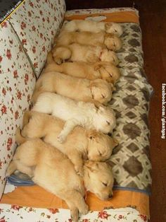 Puppies Lined Up Sleeping