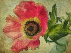 Anemone I Sarah Jarrett