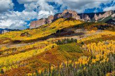 Gorgeous fall aspen and scrub oak cover the hillsides along the Cimarron Ridge in the San Juan Mountains of Colorado.
