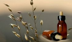 El blog de Antonio Sanz: Las flores del Dr.Edward Bach