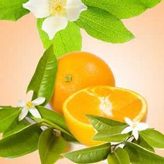 Orange Blossom: This well rounded scent blends sweet, juicy mandarin oranges, muguet lily, fresh greenery notes and a touch of amber to orange blossom petals to create this beautiful fragrance arrangement. Candle Making Supplies, Soap Making Supplies, Wholesale Fragrance Oils, Aroma Beads, Candlemaking, Natural Garden, Cold Process Soap, Orange Blossom, Essential Oils