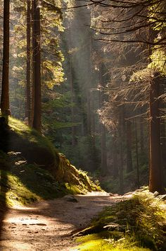Autumn Forest path and the Sun Forest Path, Autumn Forest, Forest Trail, Forest Light, Magic Forest, Autumn Nature, Conifer Forest, Woodland Forest, Tree Forest
