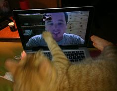 """*Reaching out to Dad~~""""My cat misses me when I deploy, he tries to cuddle me via Skype,"""" said wings19. """"My wife calls Ollie her deployment buddy."""""""