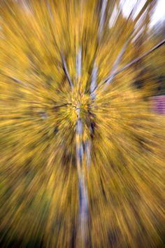 Lokakuun koivu