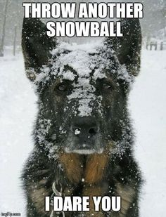 Its all fun and games until someone is hit in the face and takes offense! cool dog stories at wwwamazingdogtales.com