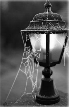 Street Light Cobwebs light halloween halloween pictures happy halloween halloween images cobwebs