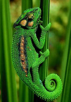 Best Examples Of Green Macro Photography