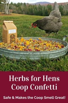 This is such a wonderful idea for chickens on the homestead! The  wonderful mix of aromatic, organic herbs & edible flowers for the chicken coop floor & nesting boxes has been carefully selected to calm hens, providing them a beautiful, restful place to lay their eggs - & the coop will smell wonderful! Completely safe, edible &  non-toxic for people & animals, so if the  chickens decide to eat some, that's perfectly fine too! #ad #homestead #homesteading #chickens #raisingchickens…