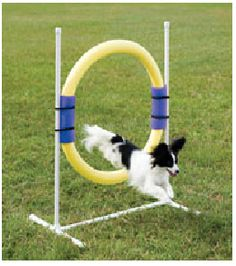 Hoop/Ring - Home Made Dog Agility Equipment--- looks like pvc pipe and a pool noodle