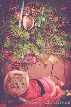Meowy Christmas by Melanie  Lankford Photography on 500px