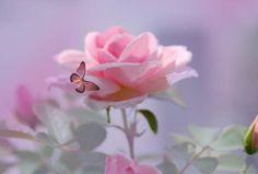 The Enchanted Cove - maltesegirl: (via Summer Love by Elaine Manley)   We Heart It