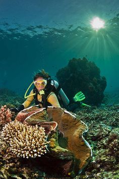 cassandra and the giant clam | by Paul Cowell