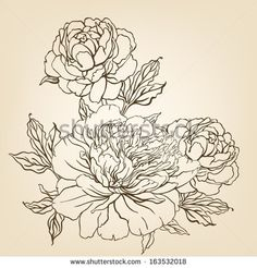 Peony: Vintage hand-drawing background with flowers. Vector illustration. by Gorbash Varvara, via Shutterstock