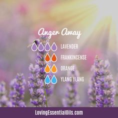Lavender Diffuser Blends - Promote Comfort & Oily Wellness by Loving Essential Oils