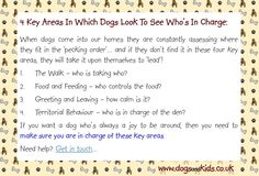If you want a dog who's always a joy to be around, then you need to make sure you are in charge of these 4 key areas