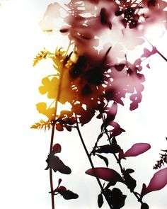 James Welling Flower 5, Chromogenic print 2005