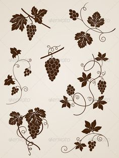 Grape Vine Design Elements - Flourishes / Swirls Decorative