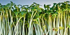 Over tuinkers, zaaien en de boomgaard - Tuin - Naober Magazine
