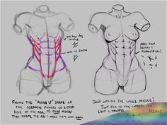 Drawing Female Body, Body Reference Drawing, Art Reference Poses, Anatomy Reference, Body Anatomy, Anatomy Art, Anatomy Drawing, Anatomy Poses, Human Anatomy