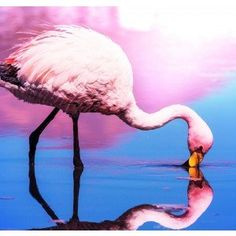 Flamingo Reflection Canvas Wall Art