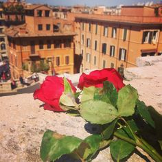 Roses and Rome.