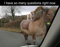 ME TOO, LIKE WHY IS A DOG RIDING A HORSE? WHAT ARE THEY DOING OUT THERE? WHERE ARE THEY GOING?