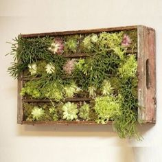 une cagette en bois accrochée verticalement au mur avec des casiers et remplie de plantes grasses et suculentes