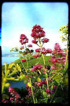 #wildflowers  #summer  #nature