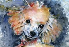 Dog Painting - Toy Poodle by John D Benson