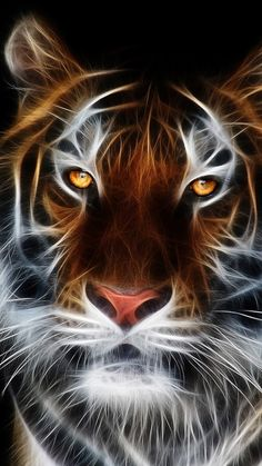 The Electric Tiger - Funny Animal Pictures Tigre. Tier Wallpaper, Animal Wallpaper, Boat Wallpaper, Widescreen Wallpaper, Wallpaper Pictures, Hd Desktop, Desktop Wallpapers, Iphone Wallpaper, Animals And Pets