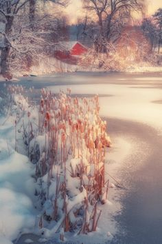 Cattails and the Cabin by Paul Jolicoeur
